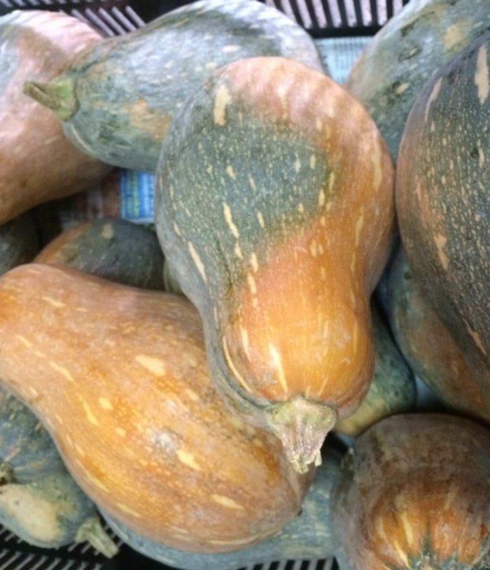 Pumpkin Organic