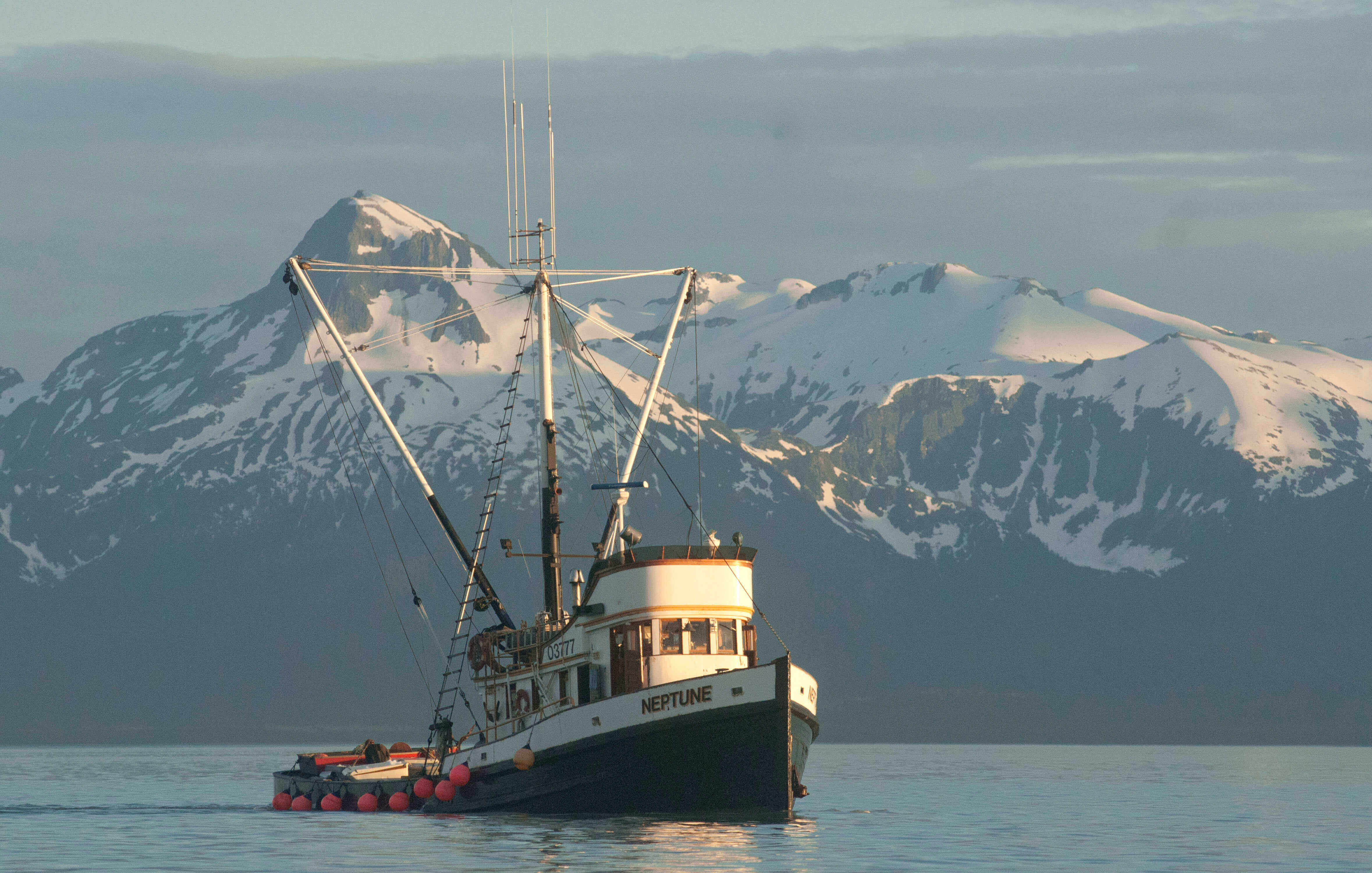 Alaskan cod wild caught straits market singapore for Hagen s fish market