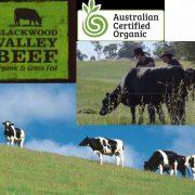 diced beef singapore – blackwood valley farm