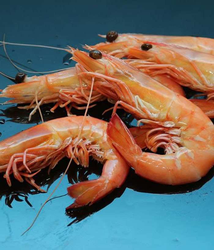 spencer gulf prawns