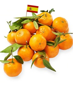 Spanish Mandarine Oranges Organic