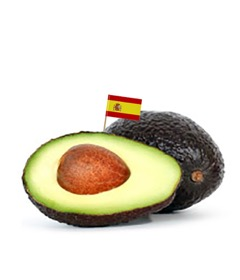Organic Spanish Avocados