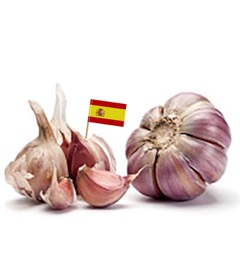 Spanish Garlic Organic