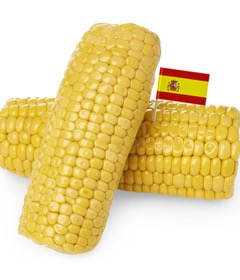 Boiled Organic Spanish Sweet Corn