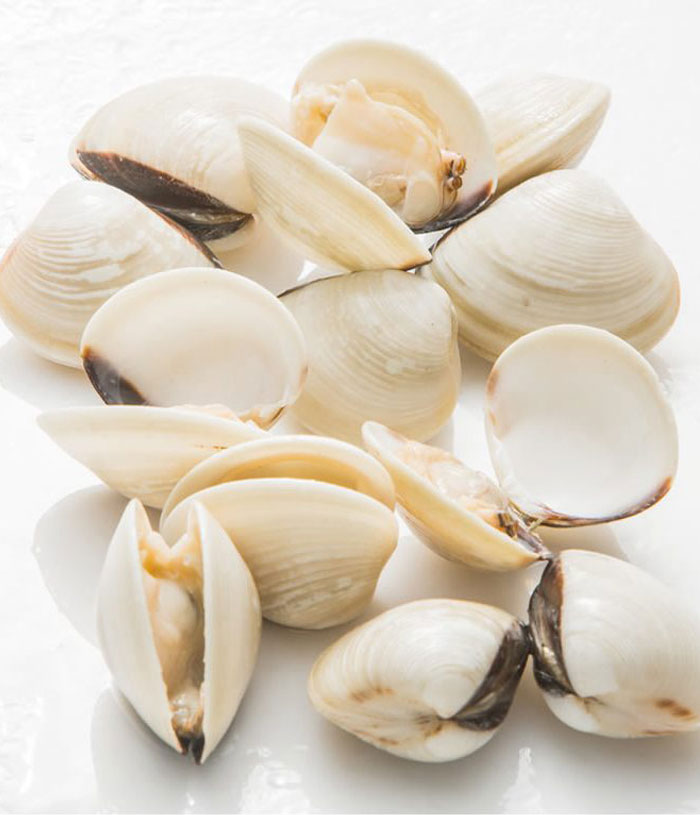 fresh white clams