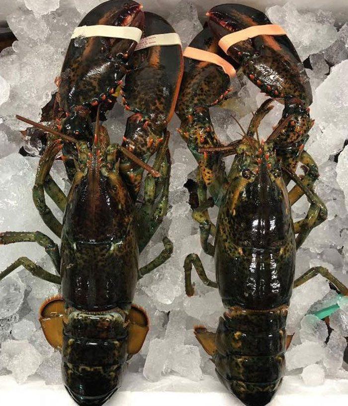fresh boston lobster