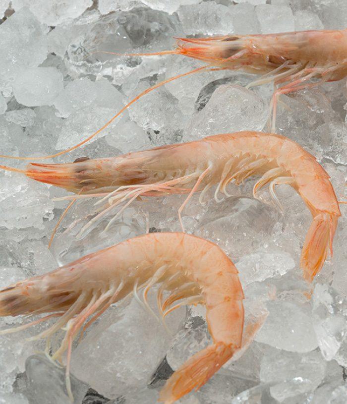 Mediterranean White Shrimp