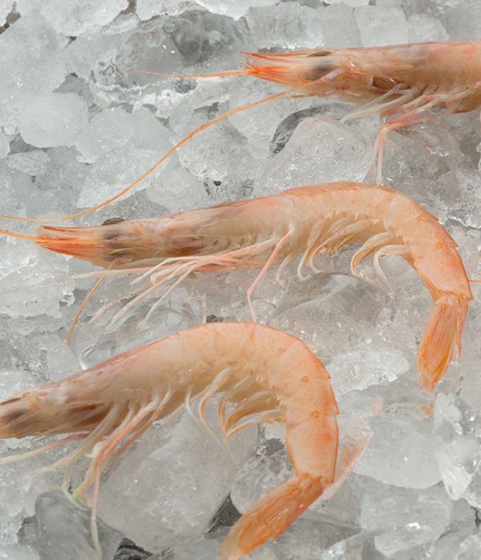 Mediterranean White Shrimp